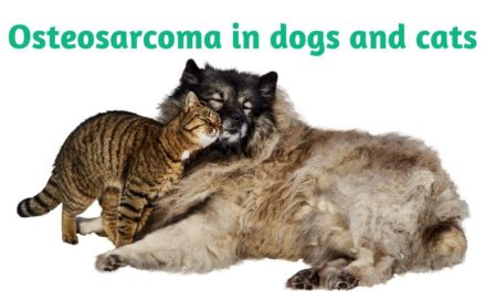 Osteosarcoma in dogs and cats