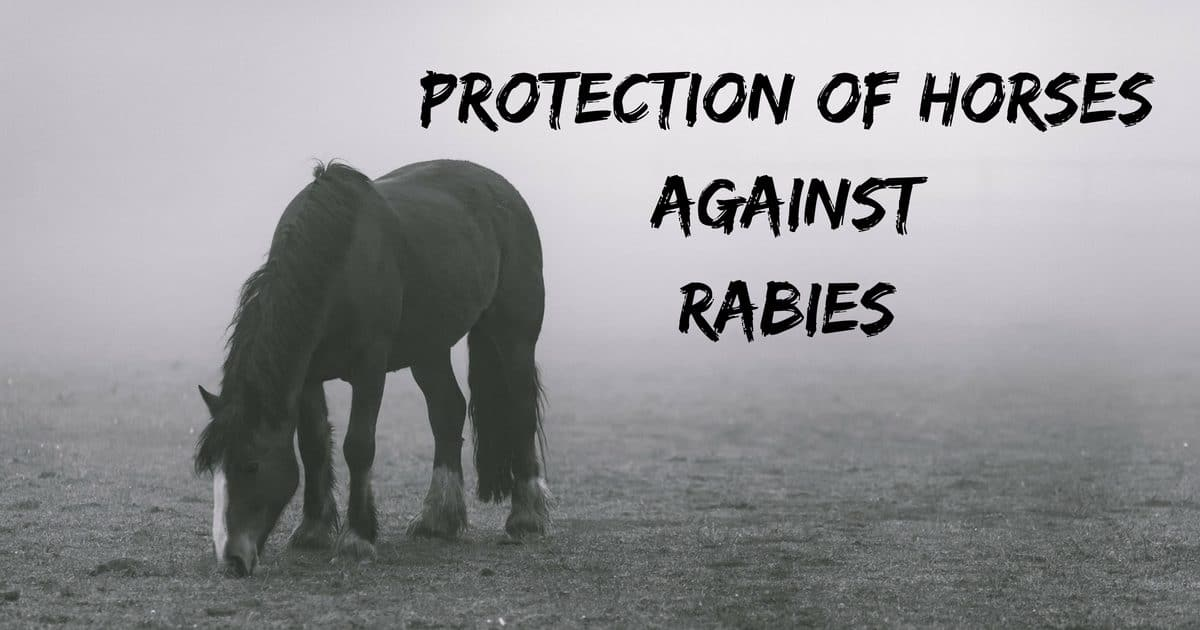 Protection of horses against rabies