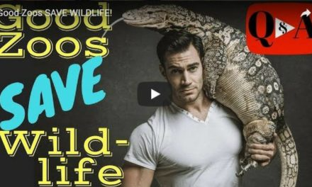 Good Zoos SAVE WILDLIFE! – Video by Dr. Evan Antin