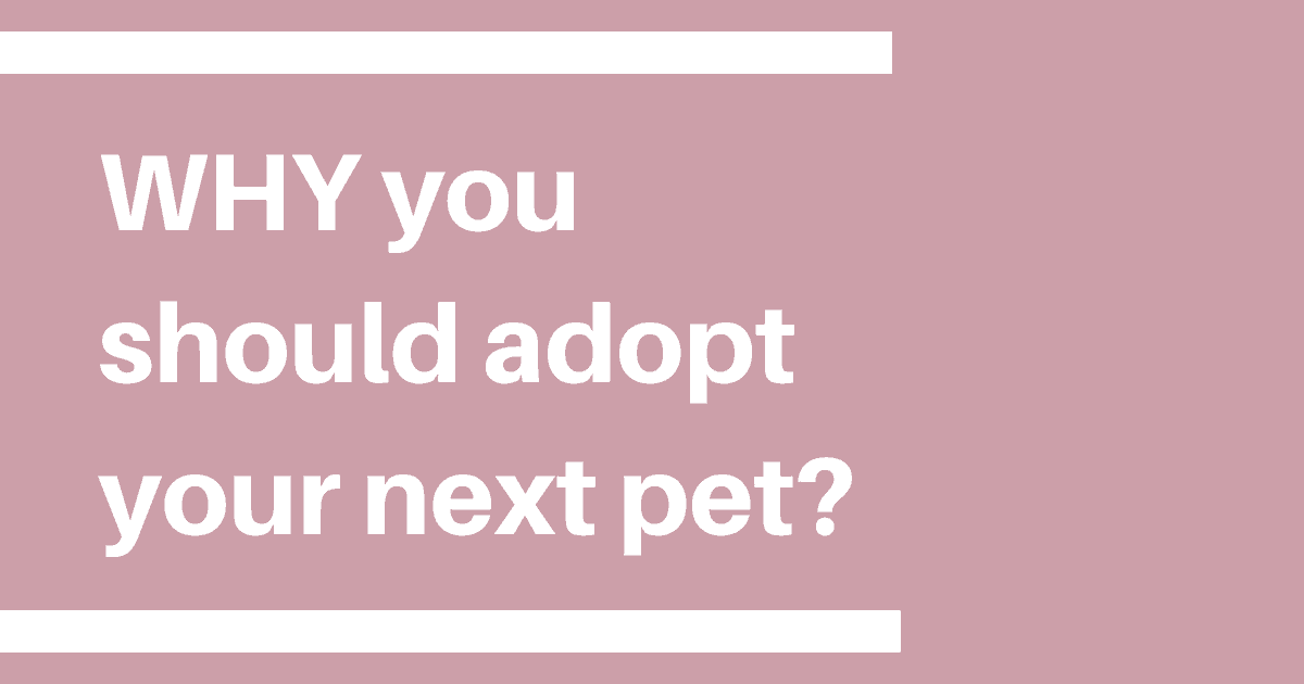 WHY you  should adopt your next pet?