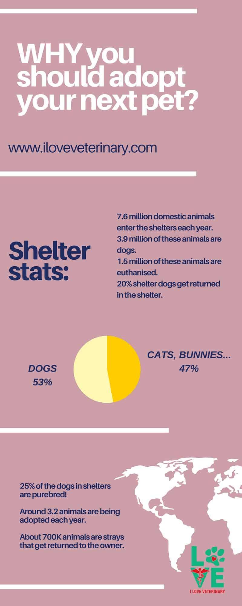 adopt infographic