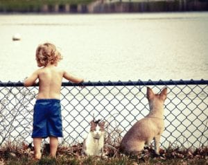 boy, cat, dog, water