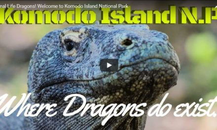 Real Life Dragons! – Video by Dr. Evan Antin