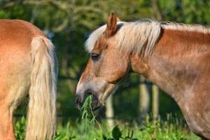 horse field grass