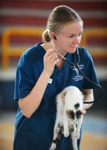 vet and kitten