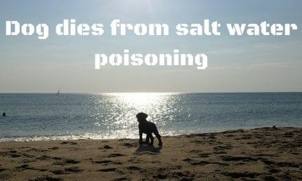 Dog dies from salt water poisoning