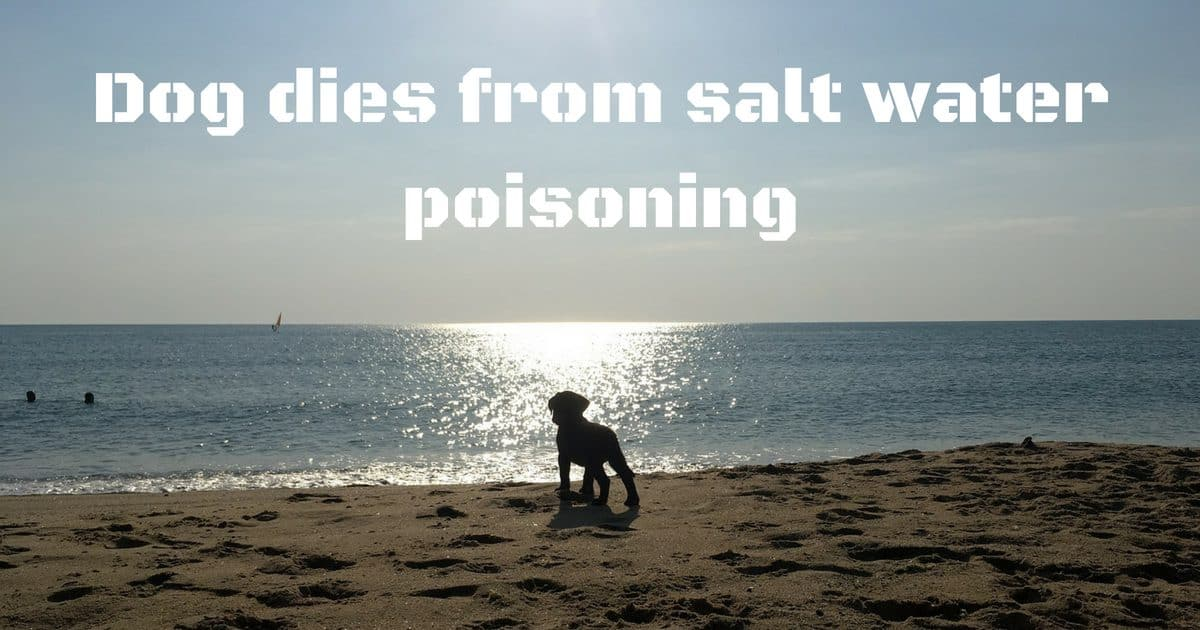 Dog dies from salt water poisoning