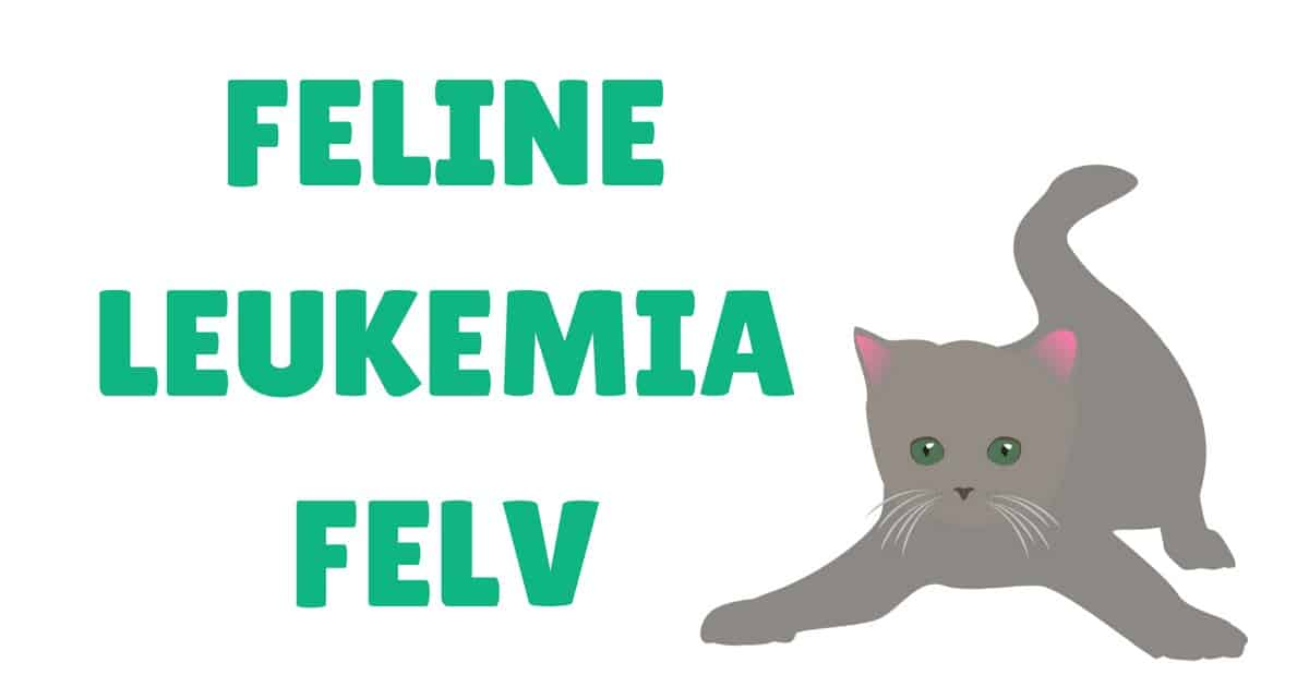 FeLV feline leukemia virus I Love Veterinary cover image