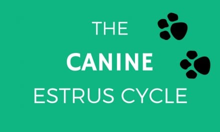 The Canine Estrus Cycle