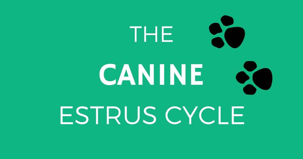 canine estrus cycle cover image