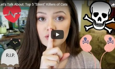 "Let's Talk About: Top 5 ""Silent"" Killers of Cats – Video by Victoria Birch"