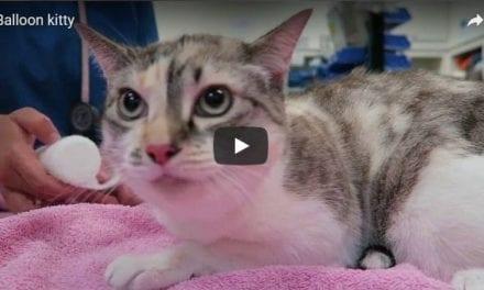 Balloon kitty – Video by Dr. Gerardo Poli