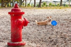 dog fire extinguisher