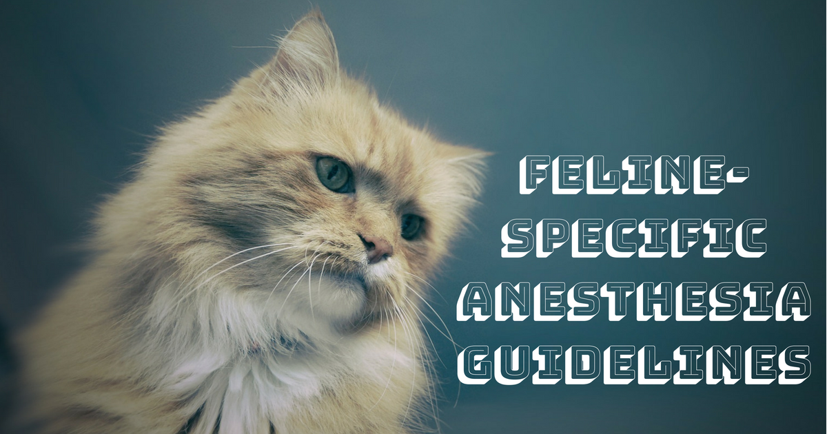 Feline-specific anesthesia guidelines