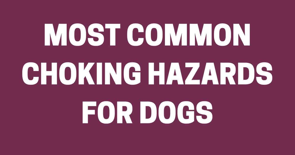 Most Common Choking Hazards For Dogs