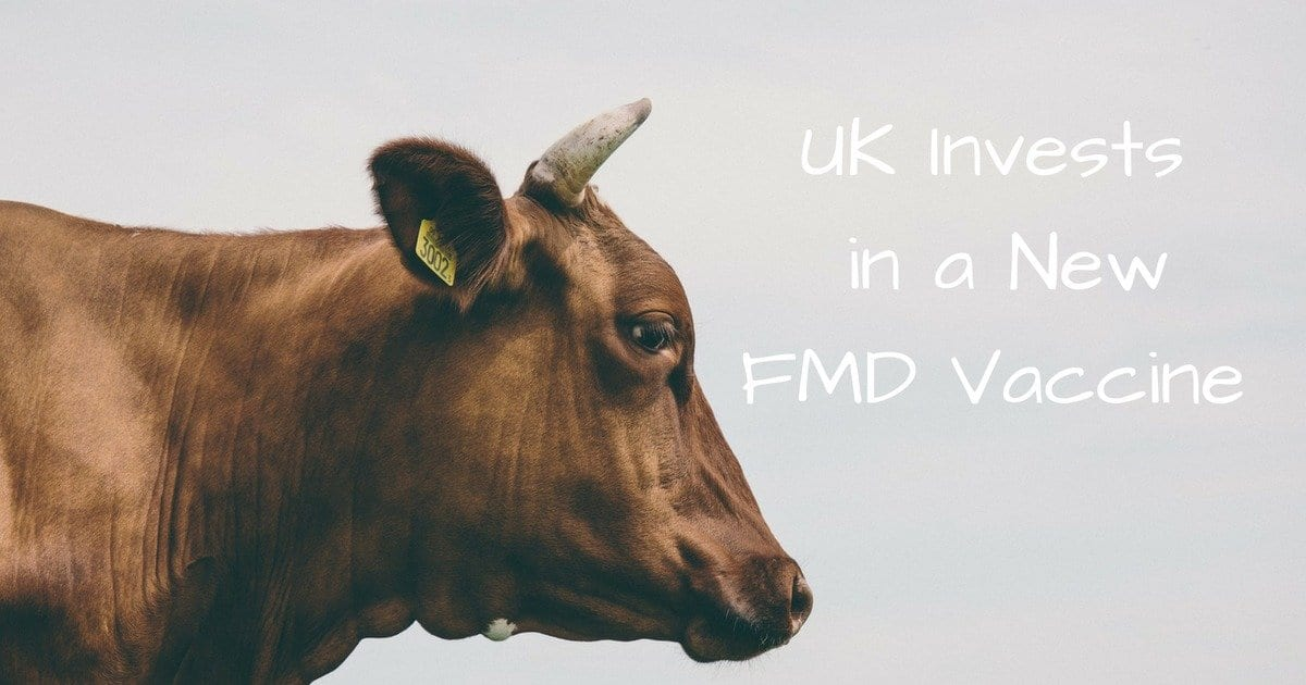 UK Invests in a New FMD Vaccine