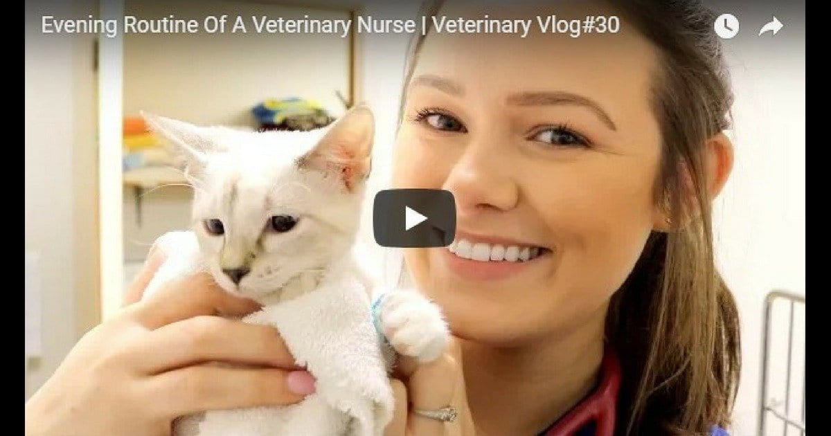 Evening Routine Of A Veterinary Nurse – Video by Victoria Birch