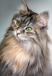 cat, feline, veterinary, health