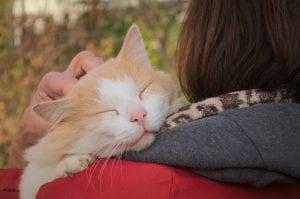 cat, cute, woman, hugging, park, nature, love