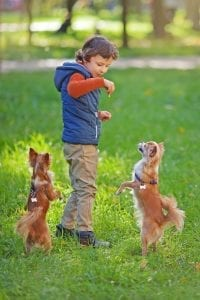 kid and 2 dogs