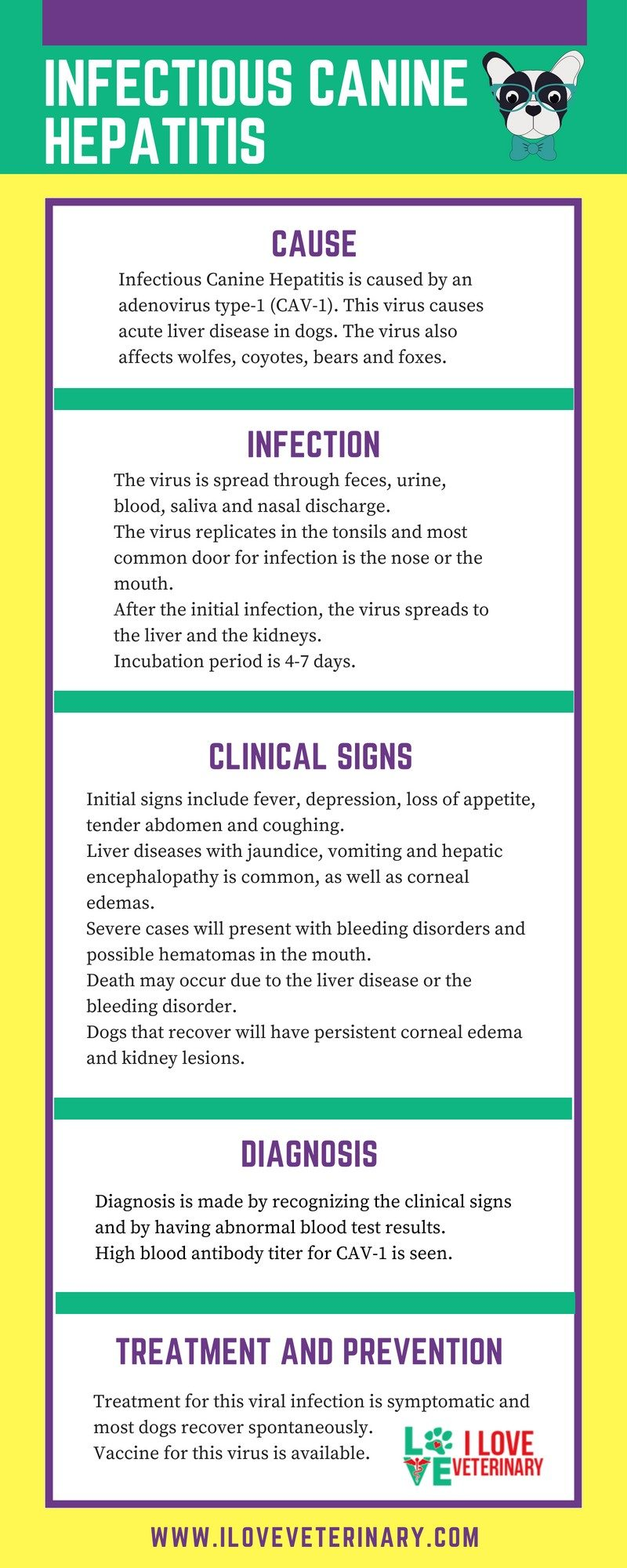 infection, canine, dog, hepatitis, liver disease, infographic