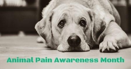 Animal Pain Awareness Month – September 2018