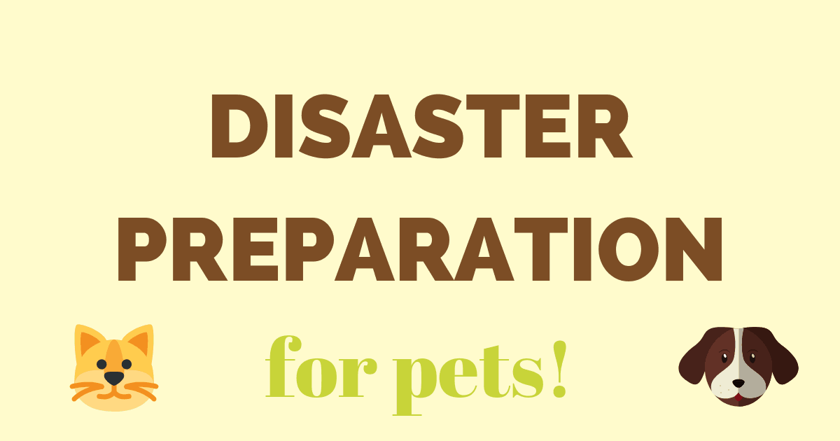 Disaster preparation for pets
