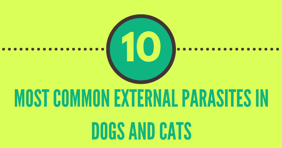 external parasites in dogs and cats