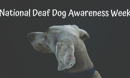 National Deaf Dog Awareness Week – September 23-29