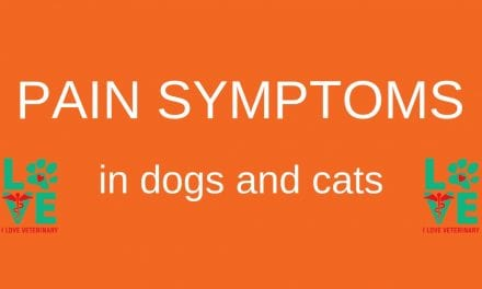 Pain Symptoms in Dogs and Cats