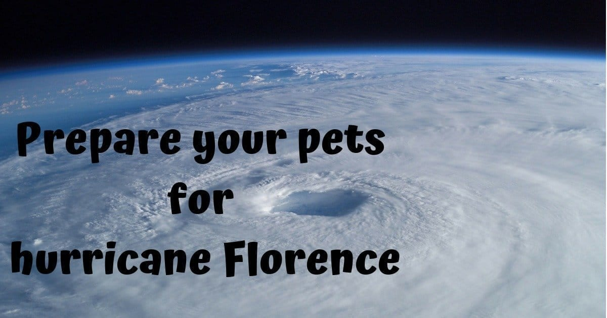 Prepare your pets for hurricane Florence