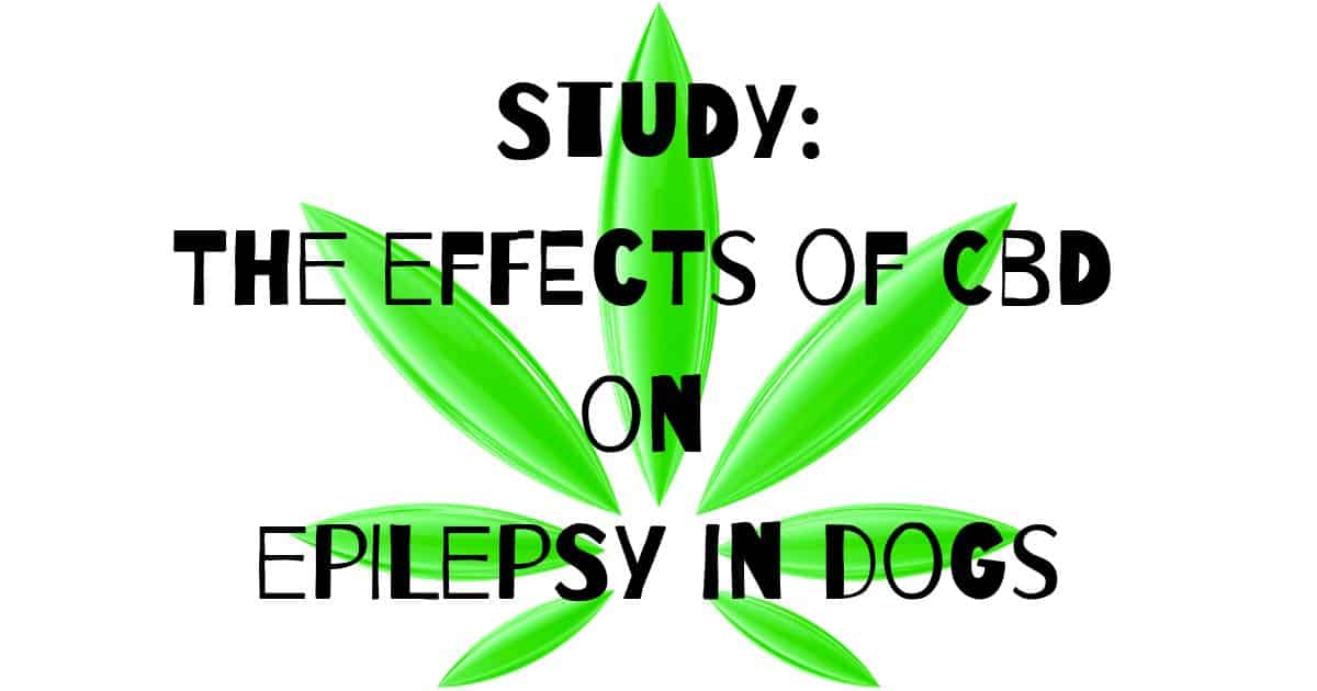 Study: The effects of CBD on epilepsy in dogs