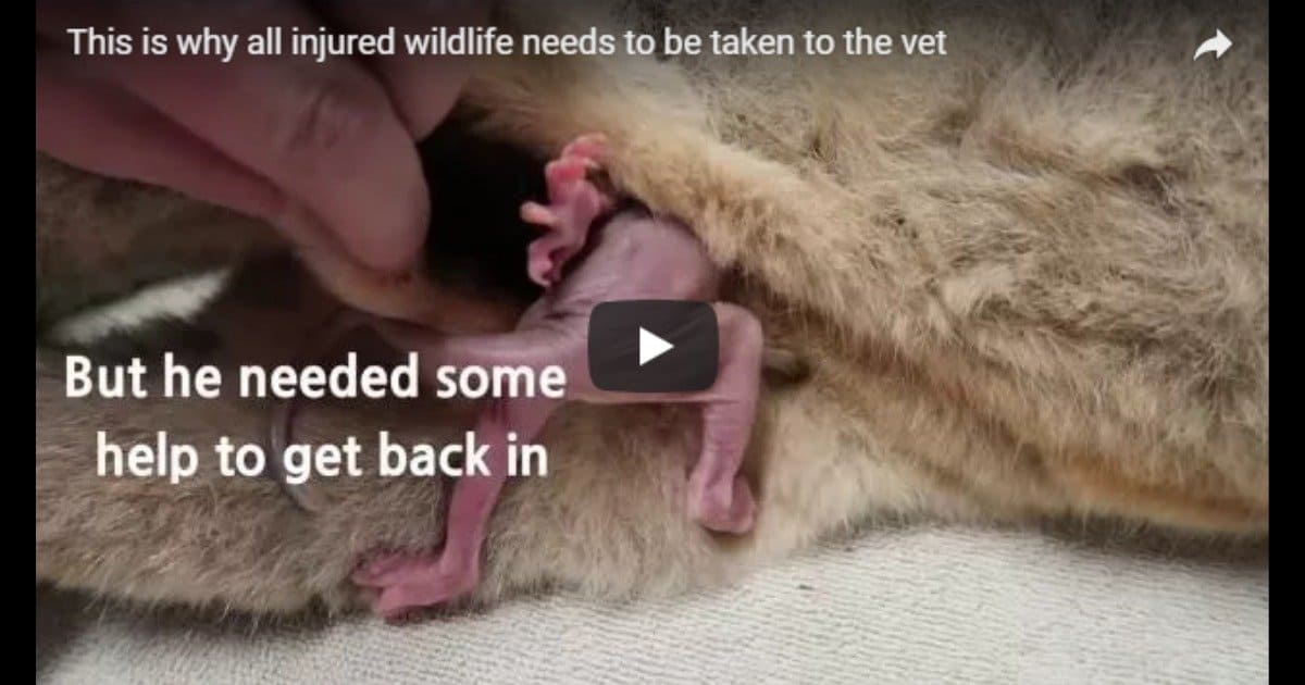 Helping injured wildlife – Video by Dr. Gerardo Poli