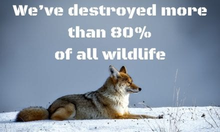 We've destroyed more than 80% of all wildlife