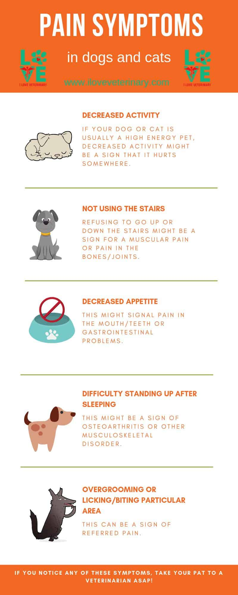 pain symptoms in dogs and cats infographic