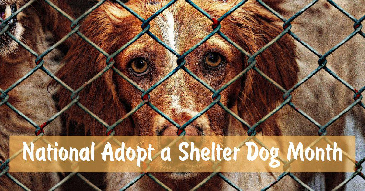 National Adopt a Shelter Dog Month – October 2018