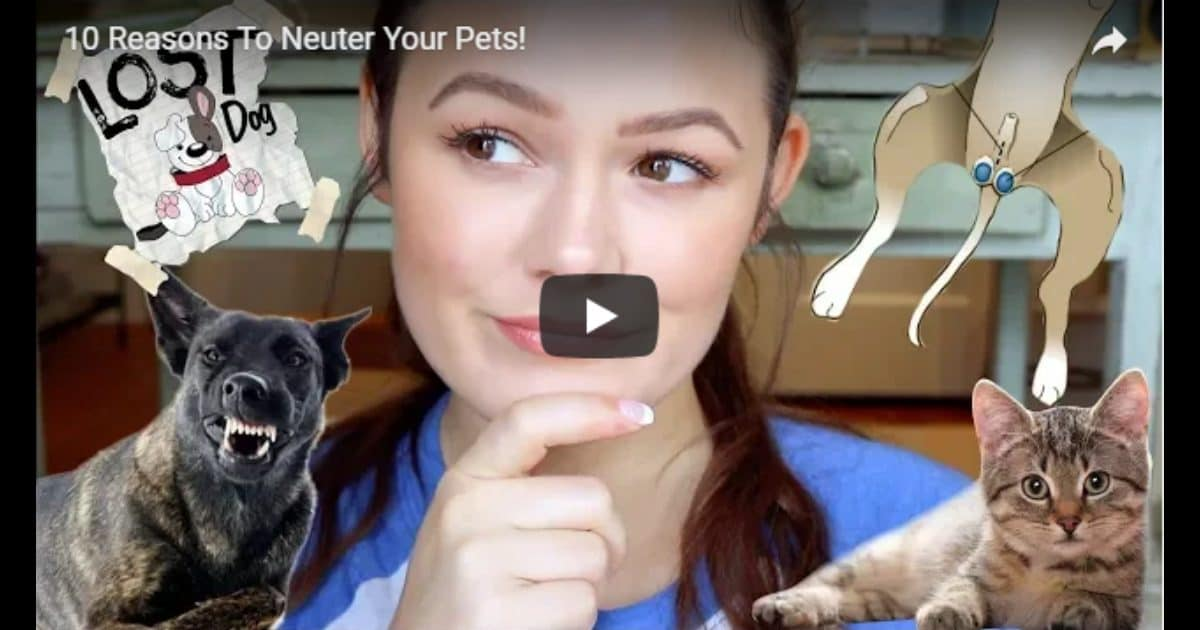 10 Reasons To Neuter Your Pets! – Video by Victoria Birch
