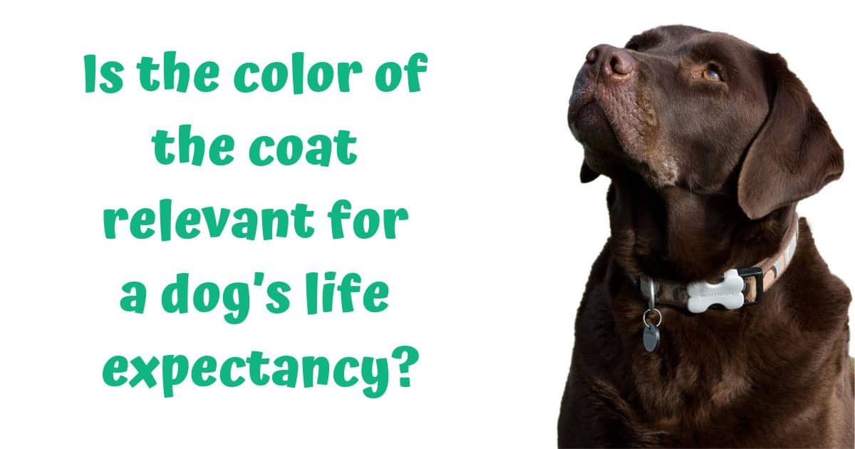 Is the color of the coat relevant for a dog's life expectancy?