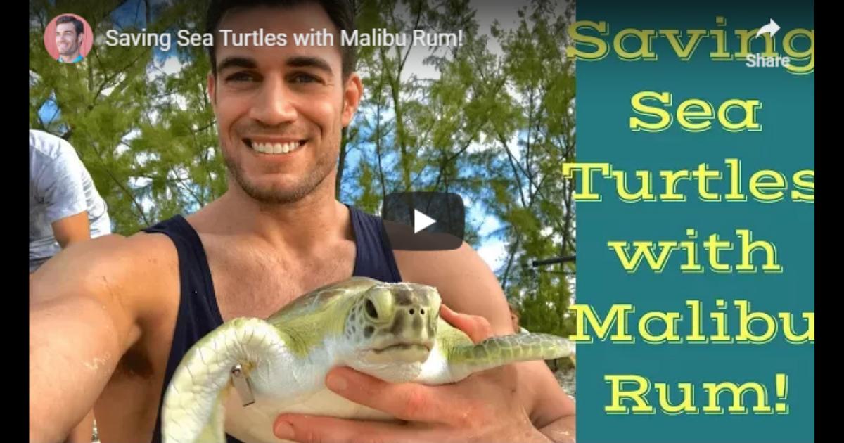 Saving Sea Turtles – Video by Dr. Evan Antin