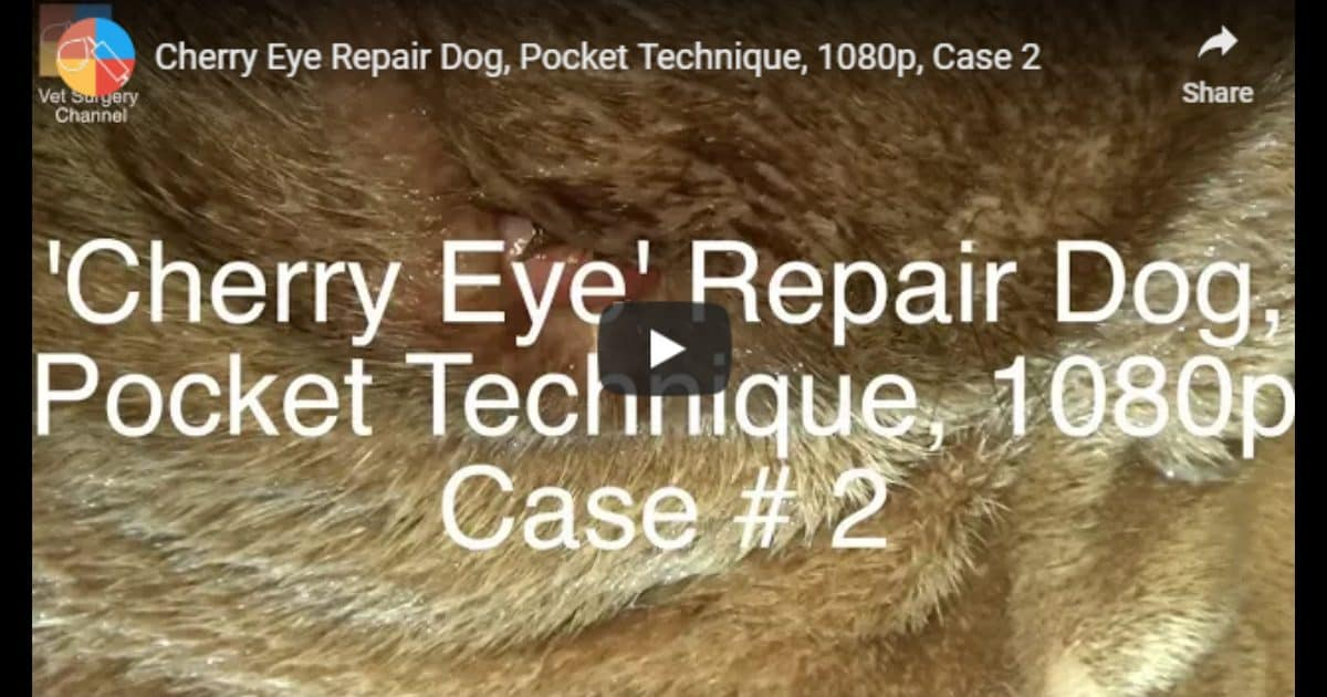 Cherry Eye Repair: Pocket Technique – Video by Vet Surgery Channel