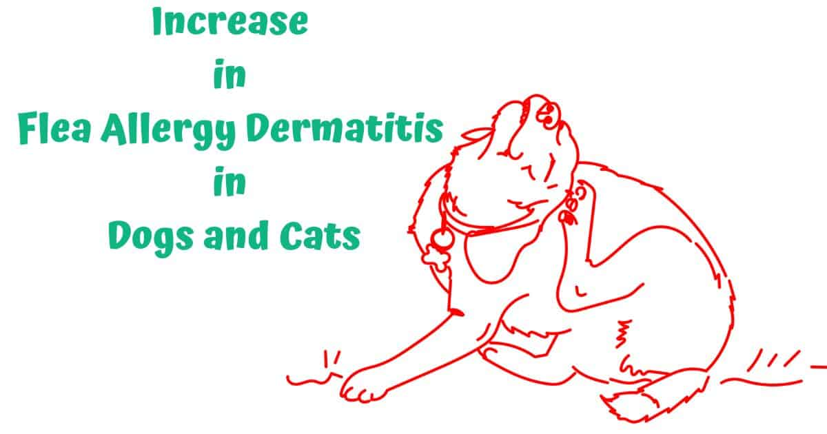 Increase in Flea Allergy Dermatitis in Dogs and Cats