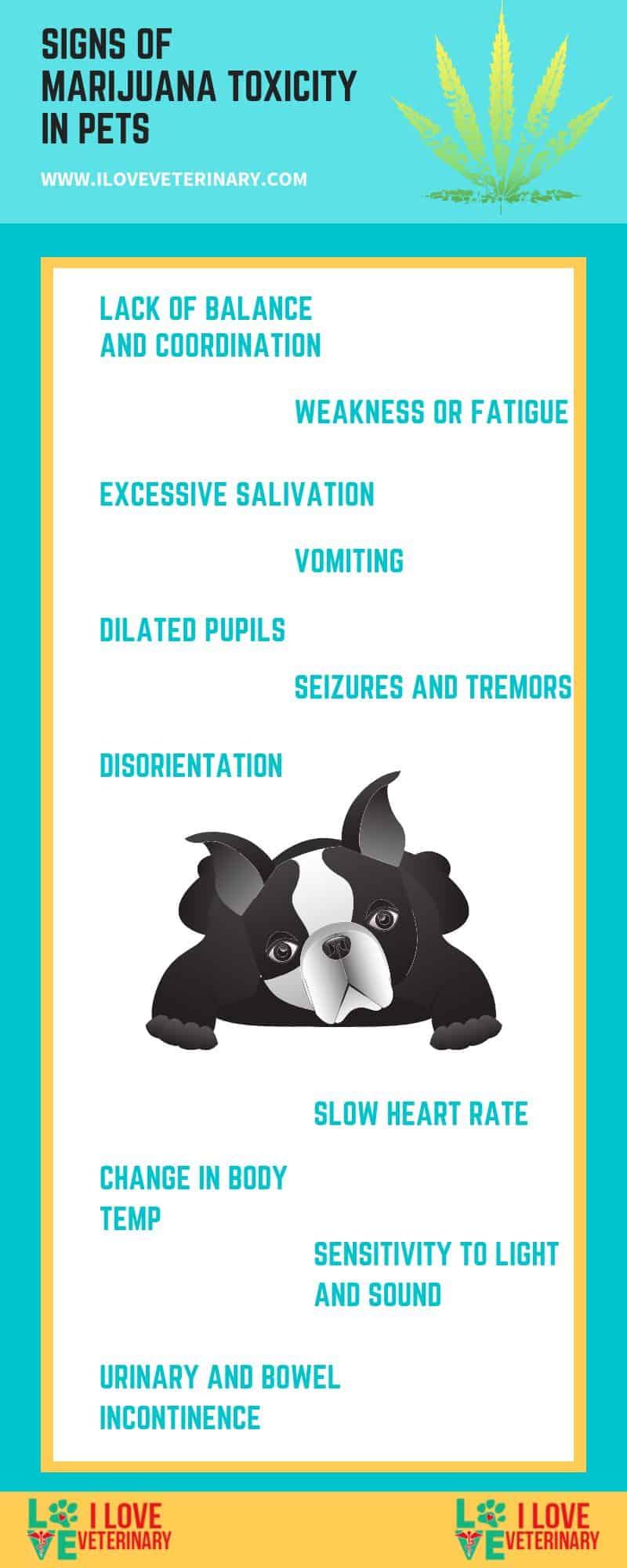 marijuana toxicity in pets infographic