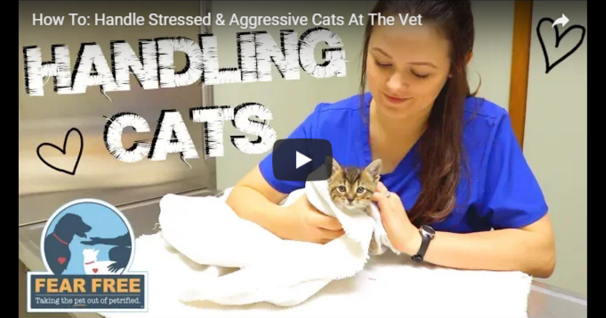 How To: Handle Stressed & Aggressive Cats At The Vet – Video by Victoria Birch