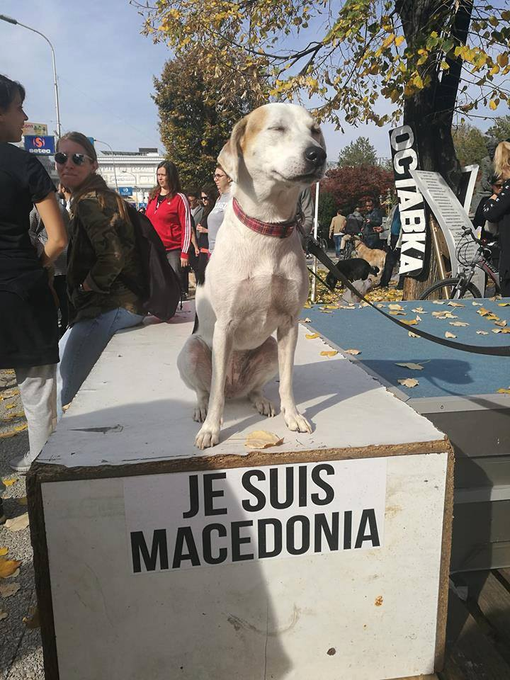 The stray dogs in Skopje, Macedonia