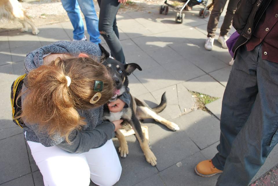 The stray dogs in Skopje, Macedonia