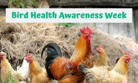 Bird Health Awareness Week – 4-10 November
