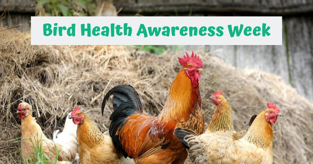 Bird Health Awareness Week