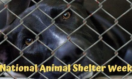 National Animal Shelter Week – 5-11 November