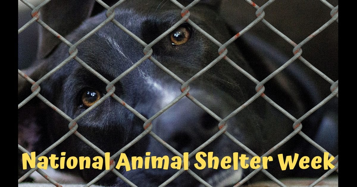 National Animal Shelter Week