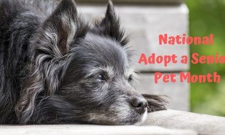 National Adopt a Senior Pet Month – November 2019